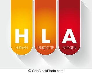 HLA - Human Leukocyte Antigen acronym, health concept ...