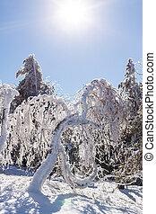 hlava, sluneční světlo, bystrý, zamrzlý, les, zima, hora