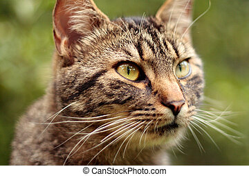 hlavička, kočka, detail, kočka, mourek, portrét