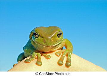 hmm tree frog