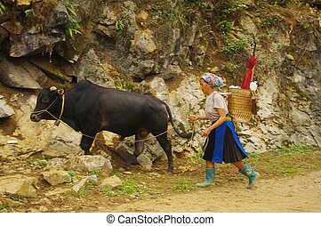Hmong women returning from the fiel - Hmong women returning...