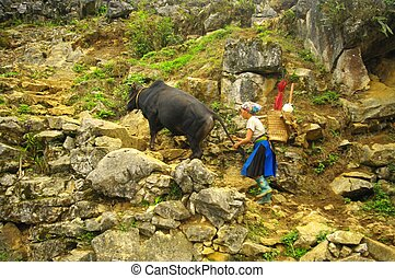Hmong women returning from the fields blank. The mountain is...