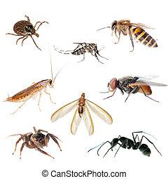 hmyz, štěnice, animální