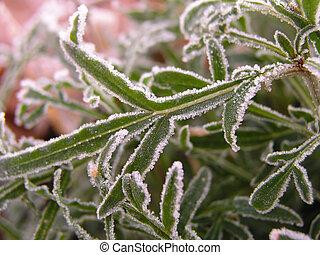 Hoar-frost 2