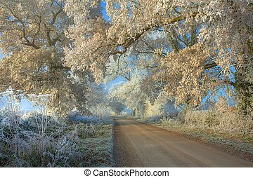 Hoar frost on oak trees near Chipping Campden, Gloucestershire, England.