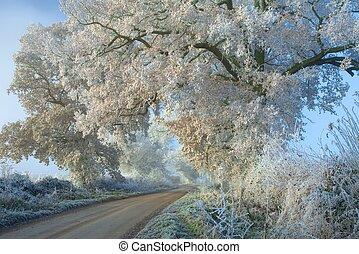 Hoar Frost, Cotswolds - Hoar frost on oak trees near...