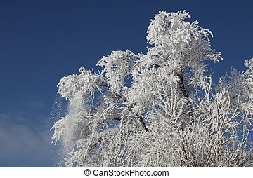 Hoar Frost Covered Tree