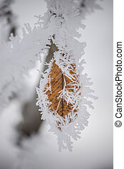 Hoar frost on a leaf.