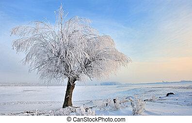 hoar-frost on tree in winter