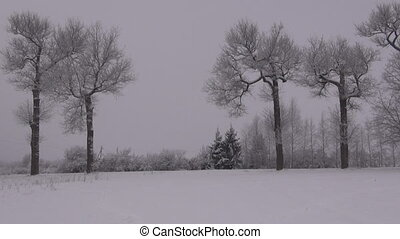 Hoarfrost covered old trees on misty overcast winter evening