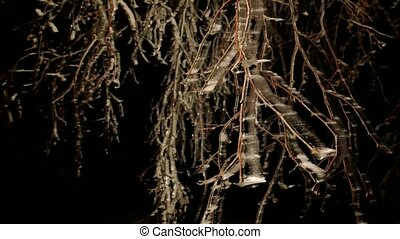 Hoarfrost covered trees branches with icy blades. Freeze...