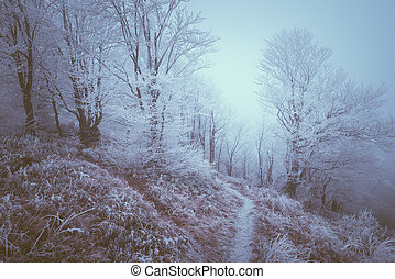 Hoarfrost in the mountain forest