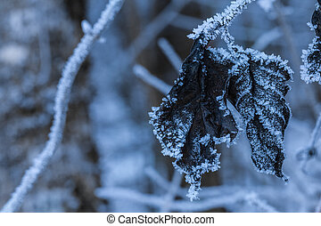 Hoarfrost leaves