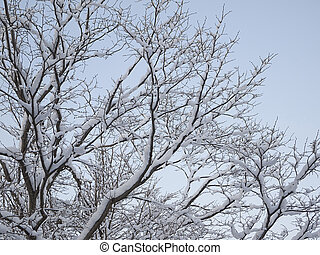 Hoarfrost of trees in winter.