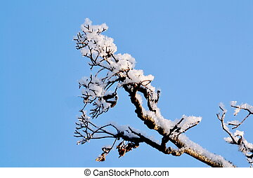 Hoarfrost on a branch