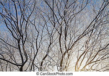 hoarfrost on a tree
