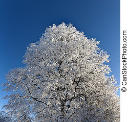 Hoarfrost on branches of a high tree.