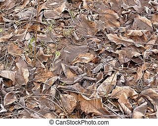 hoarfrost on fallen leaves in winter