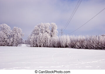 Hoarfrost on the trees and high voltage line.