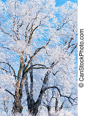 Hoarfrost on the trees