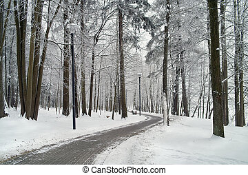 Hoarfrost on trees in frost winter.