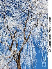 Hoarfrost on trees, Slovakia