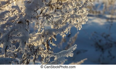 Hoarfrost on a branch in the forest
