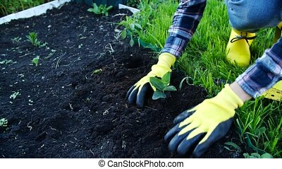 Hobby concept. Happy Woman planting young seedling