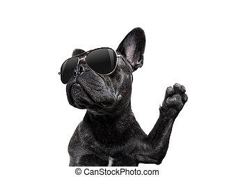 hoch, posierend, fünf, sonnenbrille, hund