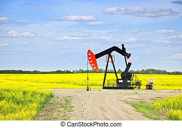 hocher, pompe huile, dans, prairies
