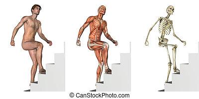 hochklettern, overlays:, treppe, anatomisch