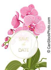 hochzeitskarten, retten, datum, orchidee, phalaenopsis