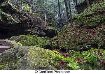 Hocking Hills Canyon - The ancient forests of the Conkles...