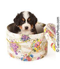 hoed doos, puppy