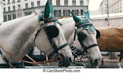 hofburg, vieux, habillé, bandeaux yeux, michaelerplatz, traditionnel, fond, élégant, blanc, vert, deux, beau, vienne, austria., écouteurs, chevaux, chapeaux, palace., chariots