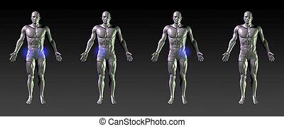 hofte, recovery