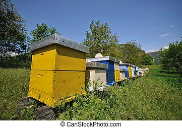 hogar, pradera, abeja