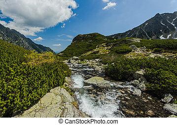 hoge bergen, stroom, alpien