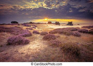 hoge, veluwe, sand, heathland, in, retro, farben