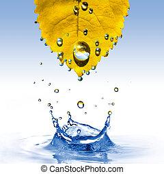 hoja, aislado, amarillo, agua, salpicadura, blanco, gotas