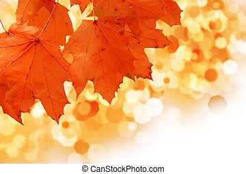 hoja amarilla del arce, en, otoño, cerca - u