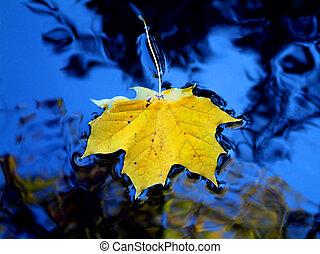 hoja amarilla, en, agua azul