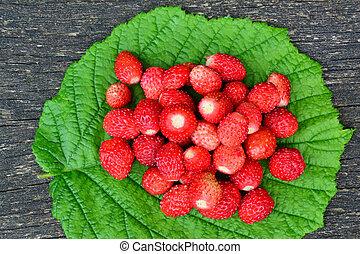 hoja, avellano, fresas, verde, salvaje, fresco