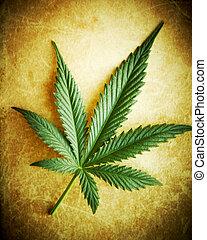 hoja cannabis, en, grunge, plano de fondo, superficial, dof.