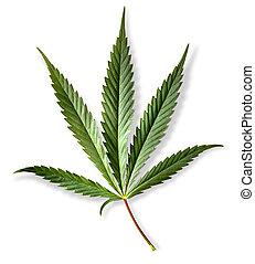 hoja cannabis, marijuana