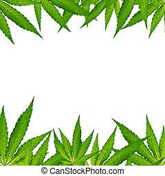 hoja cannabis, marijuana, plant.