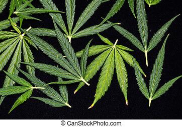 hoja cannabis, plano de fondo