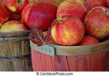 hoja de arce, con, otoño, manzanas