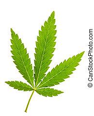 hoja de la marijuana, aislado