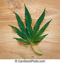 hoja de la marijuana